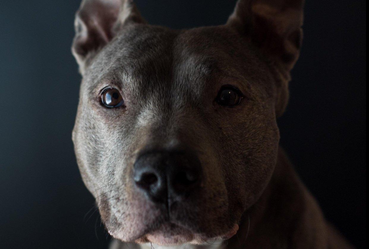 Pet Portraits - student project