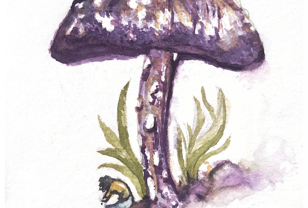 My Little Mushroom - student project
