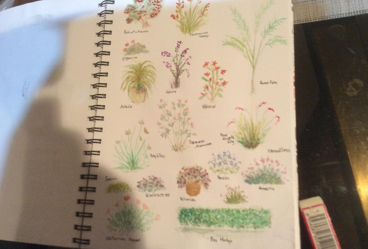 Botanical Illustration : Creating a colorful garden - student project