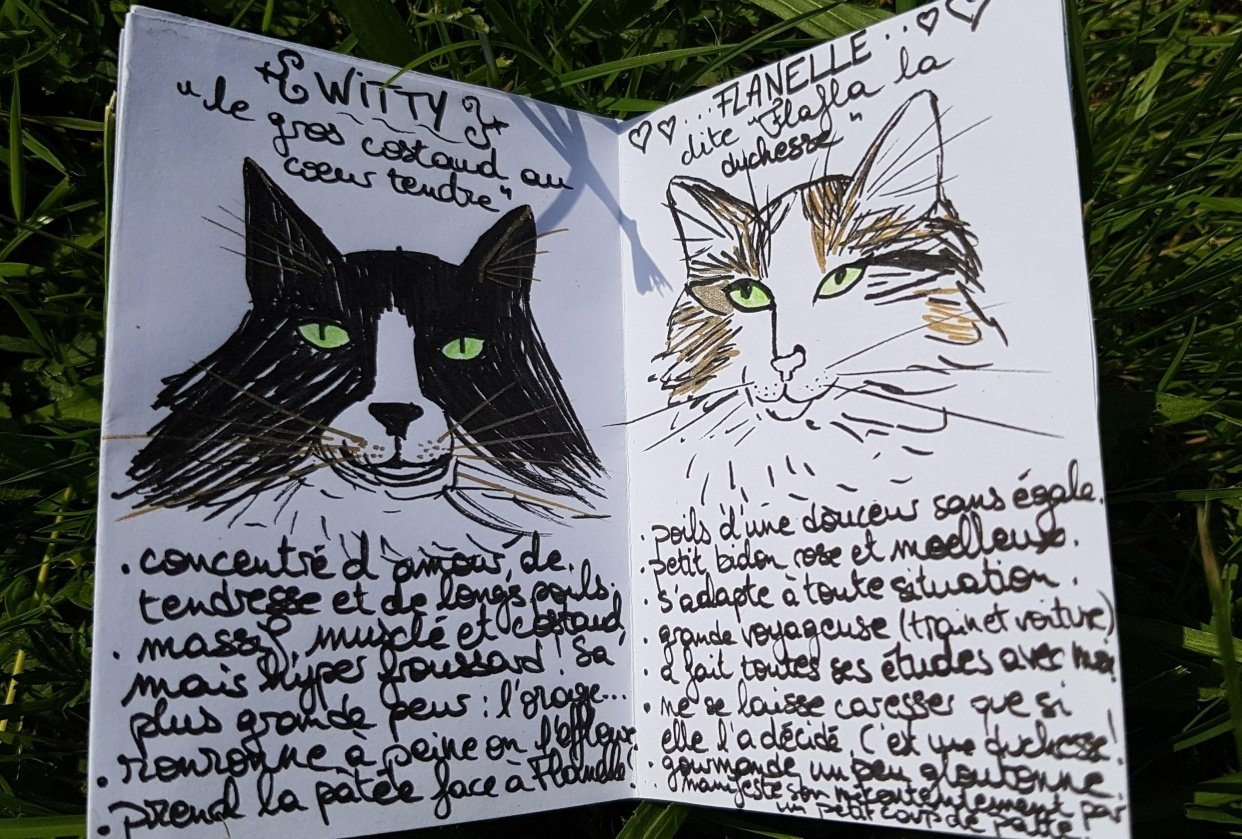 My zine - my cat family - student project