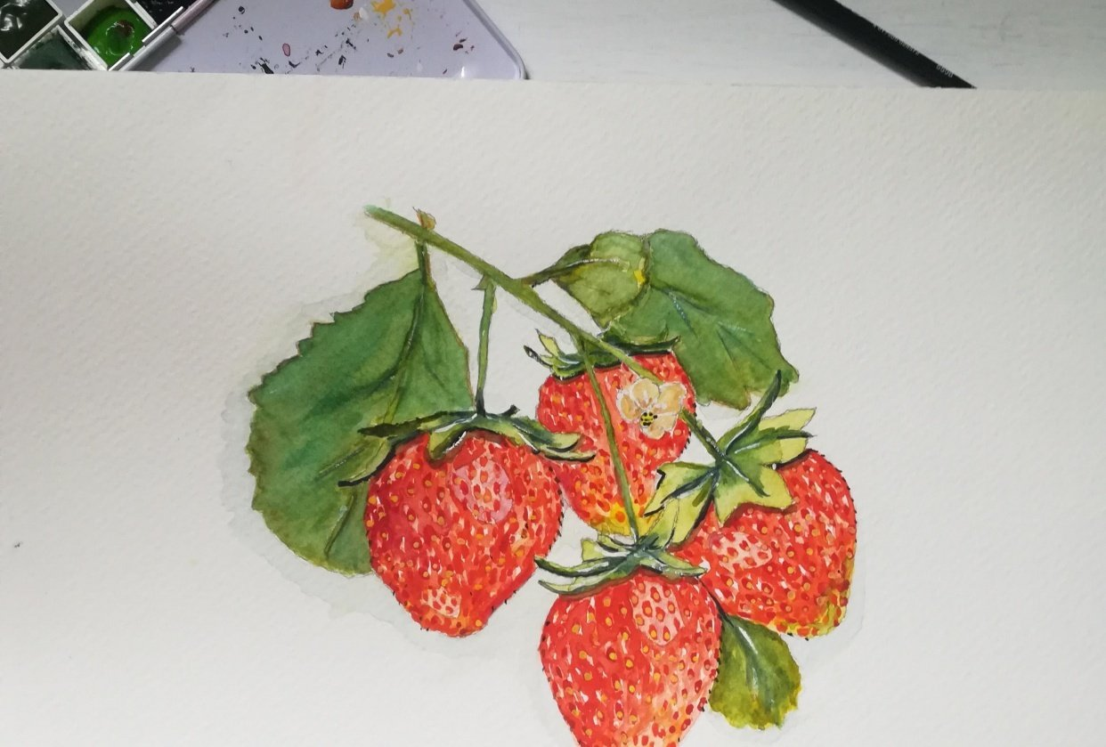 Strawberries - student project