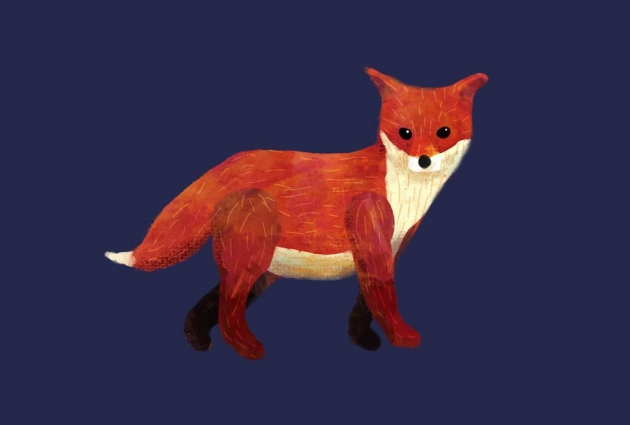 Fuse the Fox Cub - student project