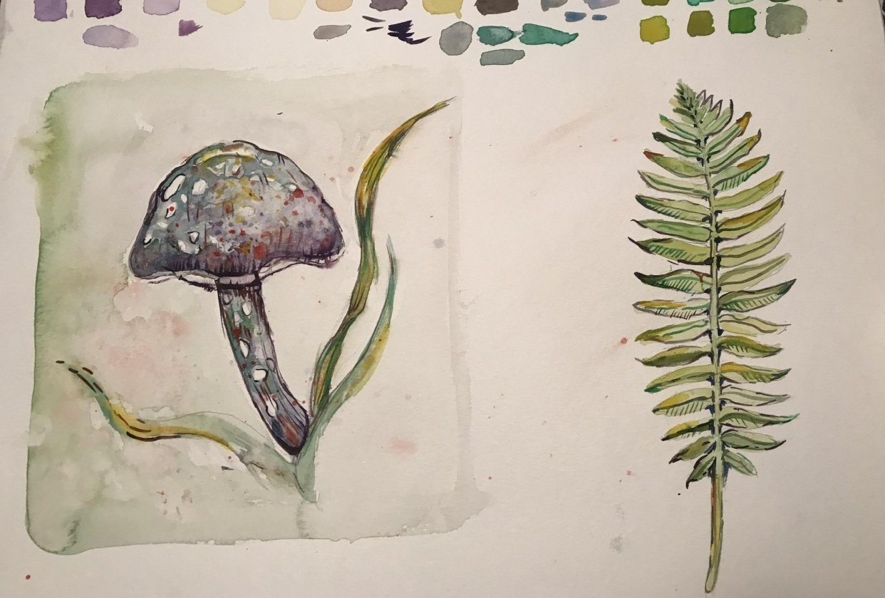 Mushroom and fern watercolour - student project