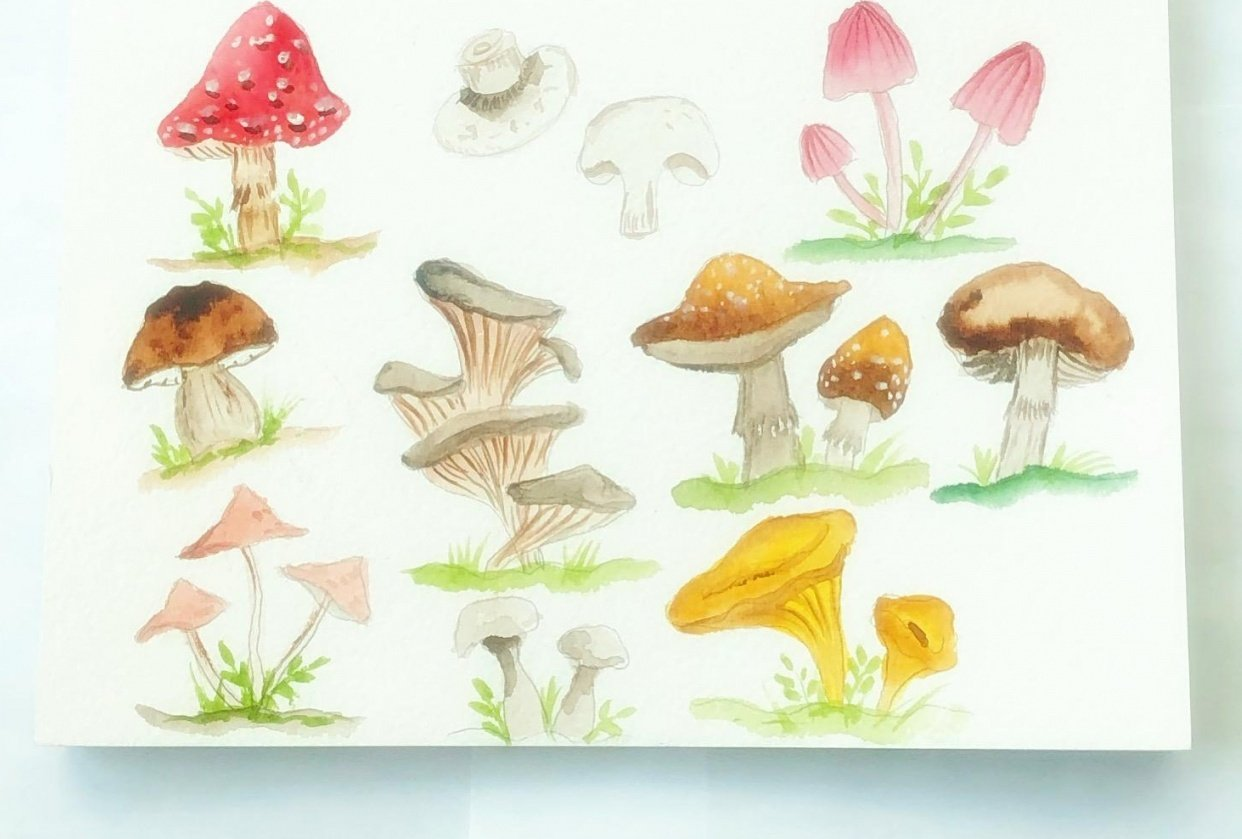 Watercolor mushrooms - student project