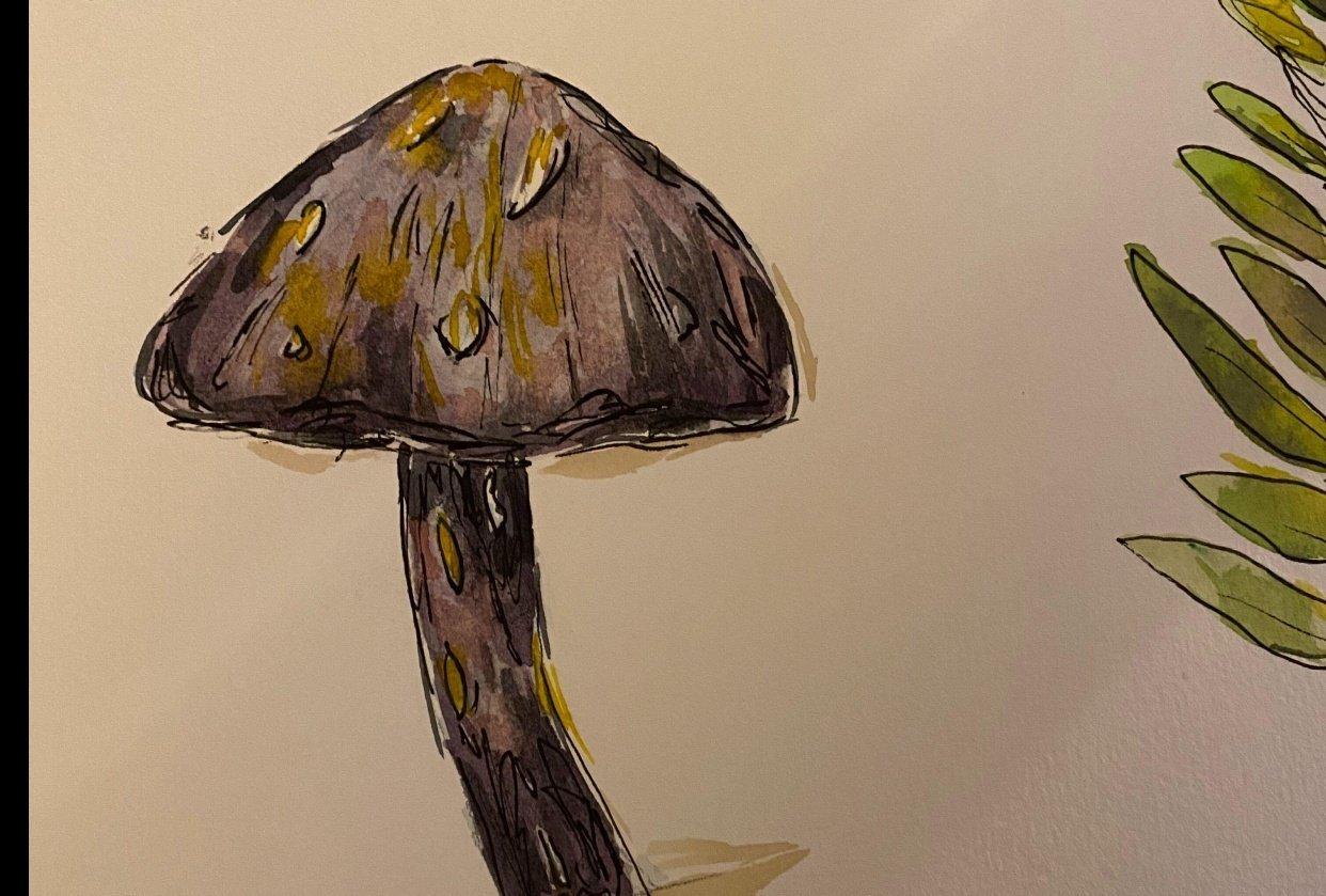 mushrooms! - student project