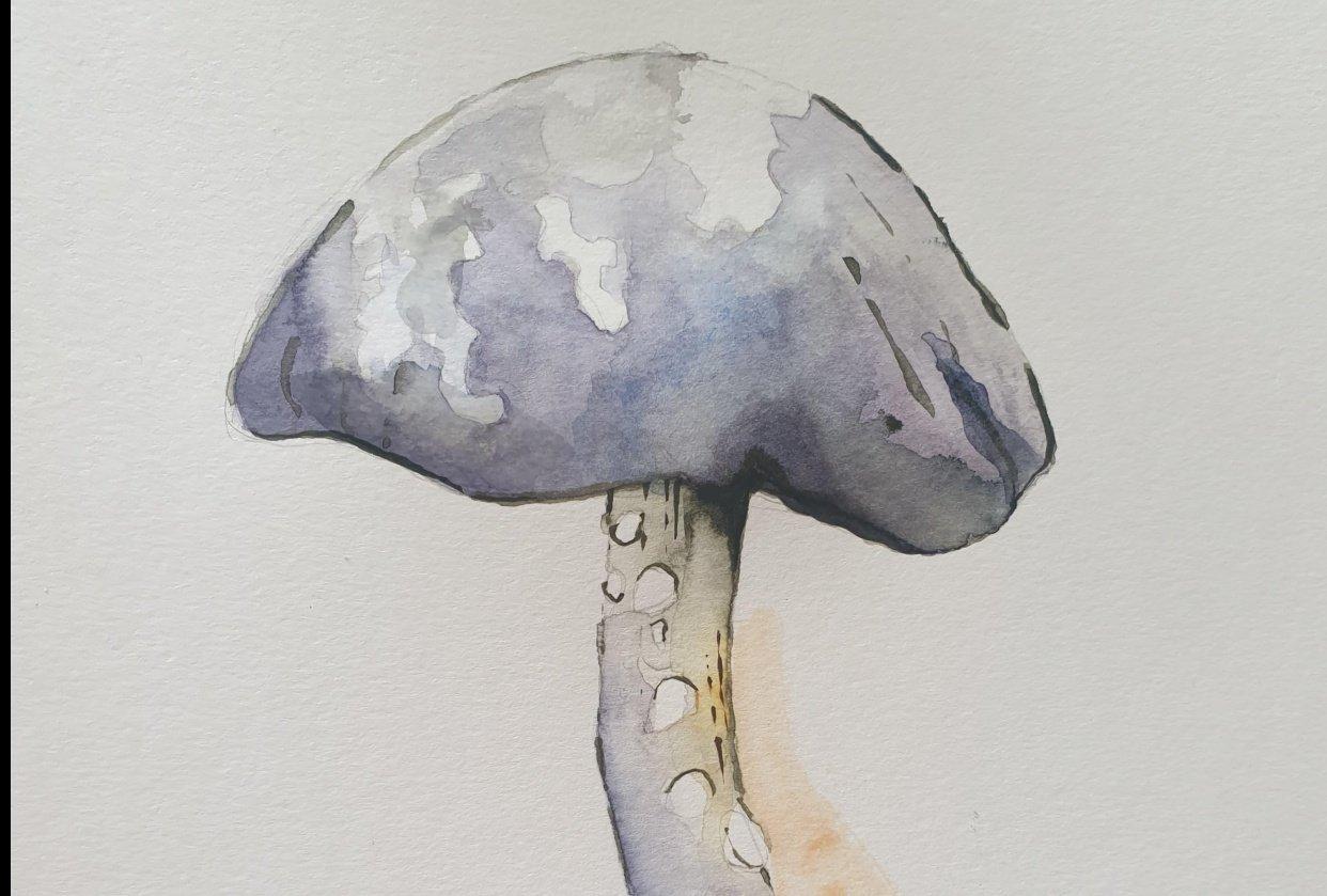 Mushroom Watercolour - student project