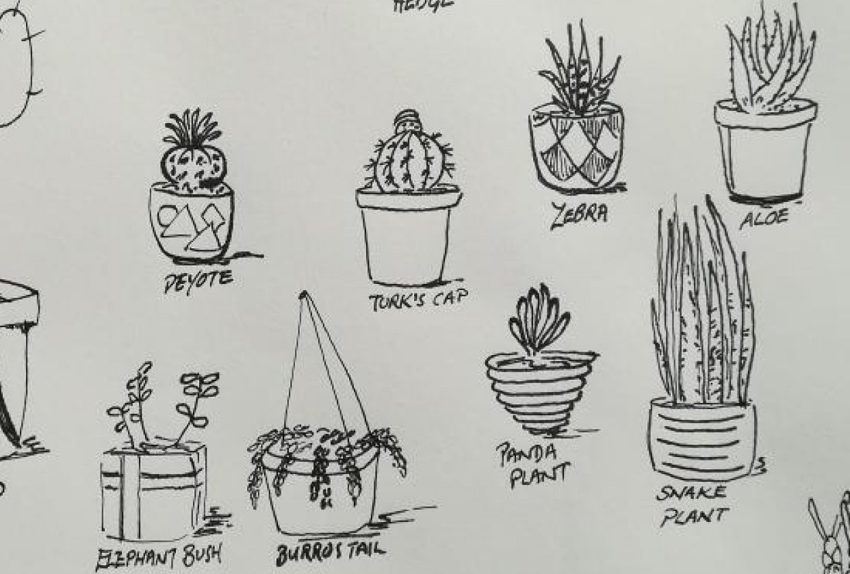 Starting with succulents - student project