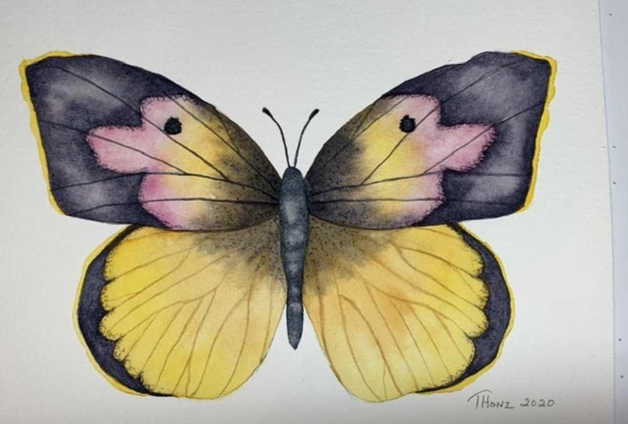 Dog Face Butterfly - student project