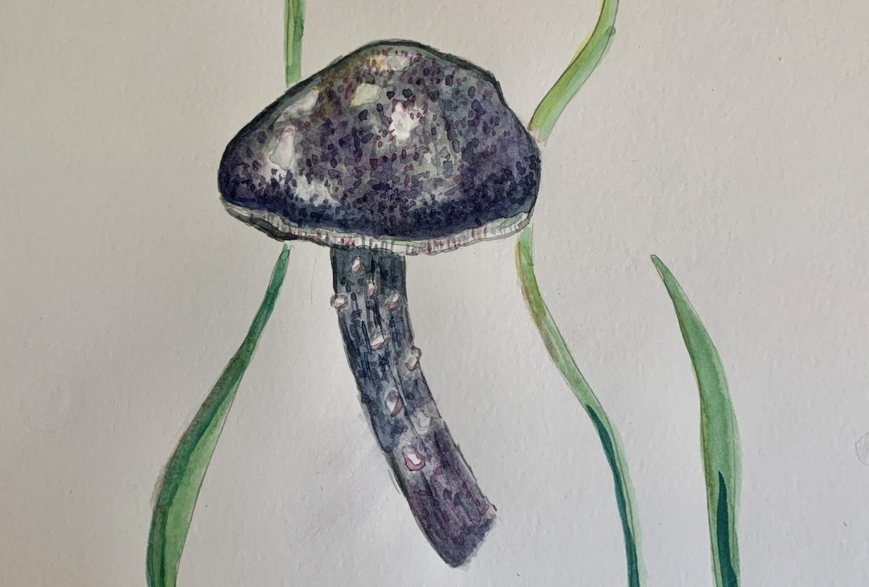 Mushroom in the grass - student project