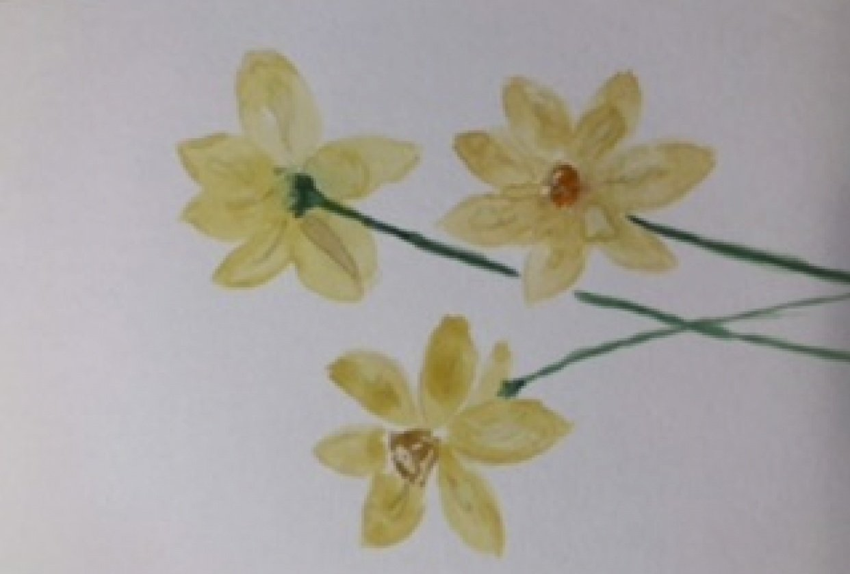 Daffodils card - student project