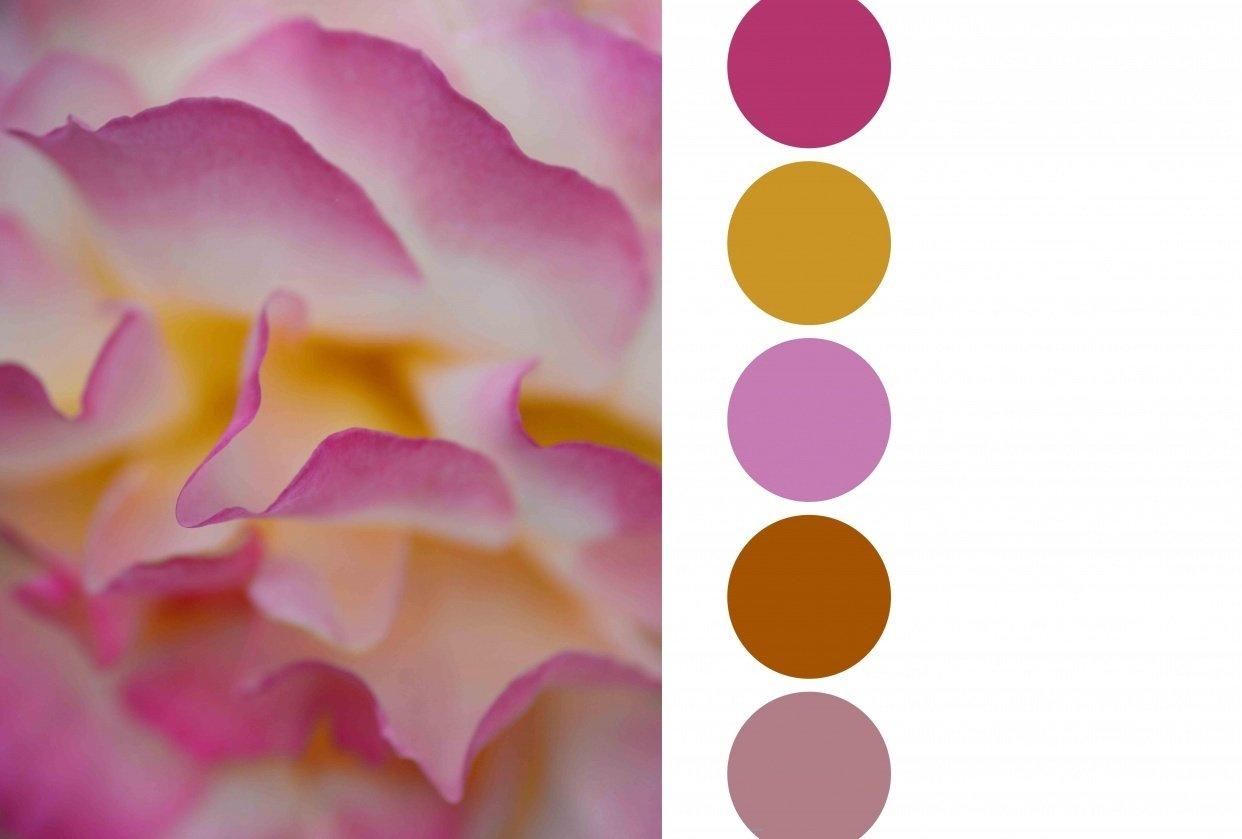 Flower Colour palette - student project