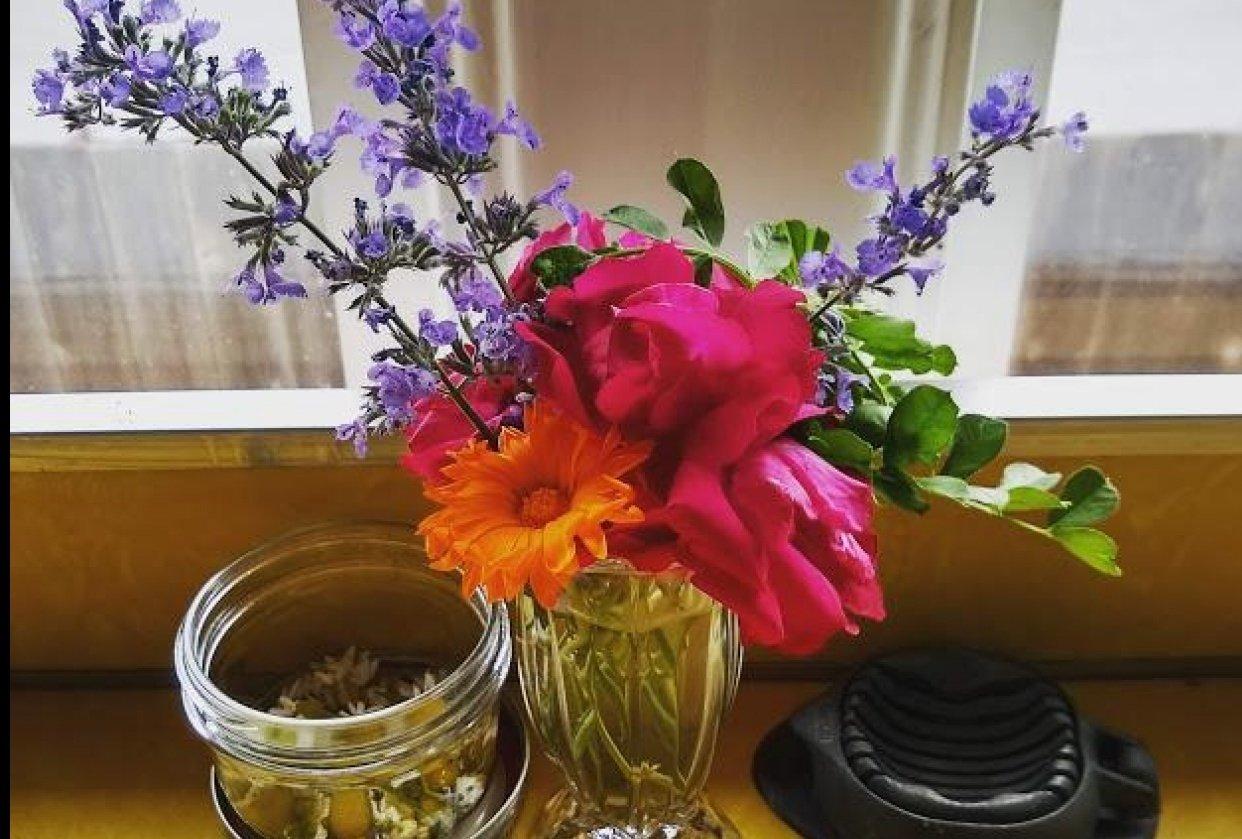 everyday backyard flowers - student project