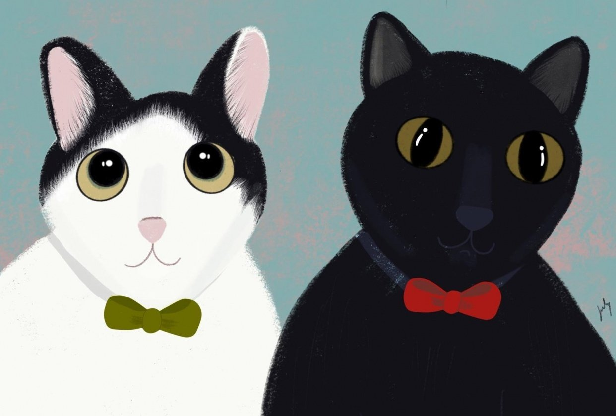 Cats - student project
