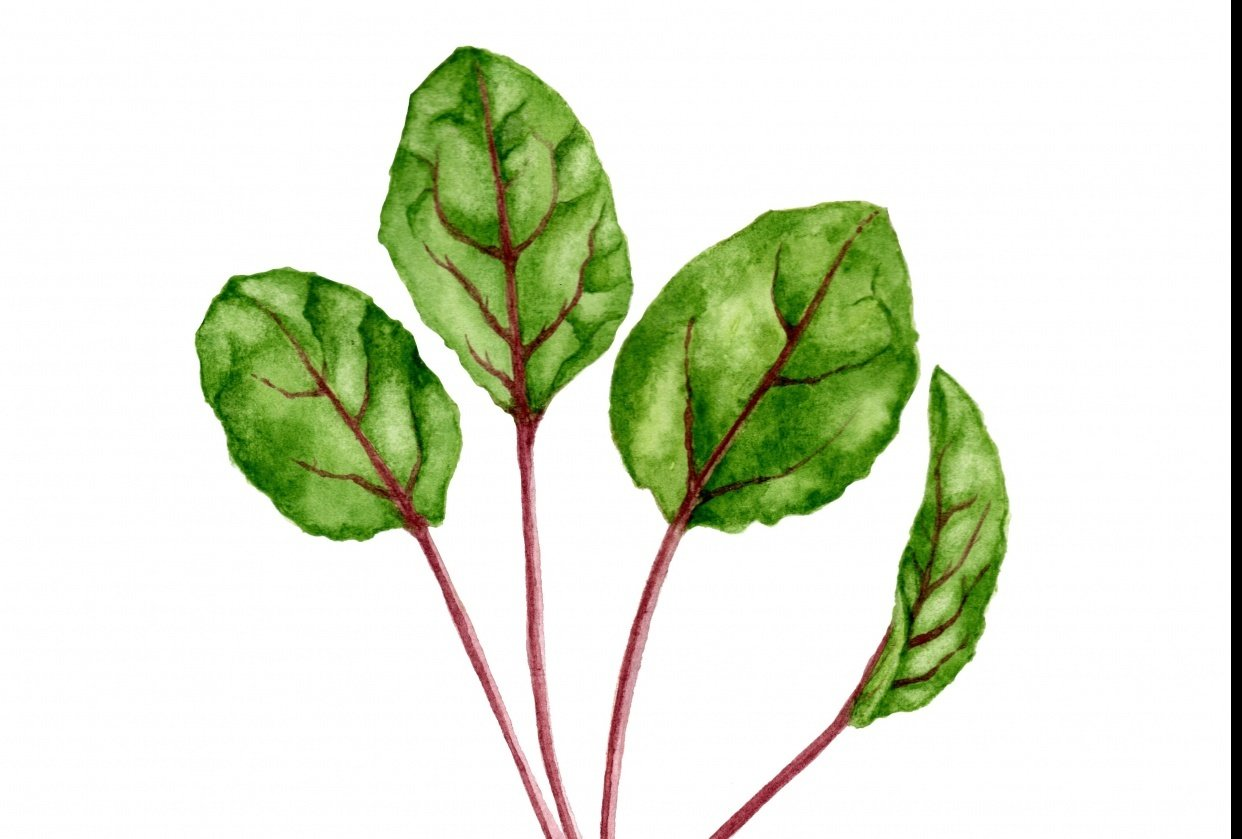 Watercolor Herbs - student project