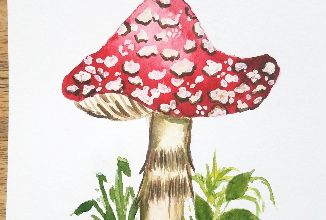 Fly Agaric Mushroom - student project