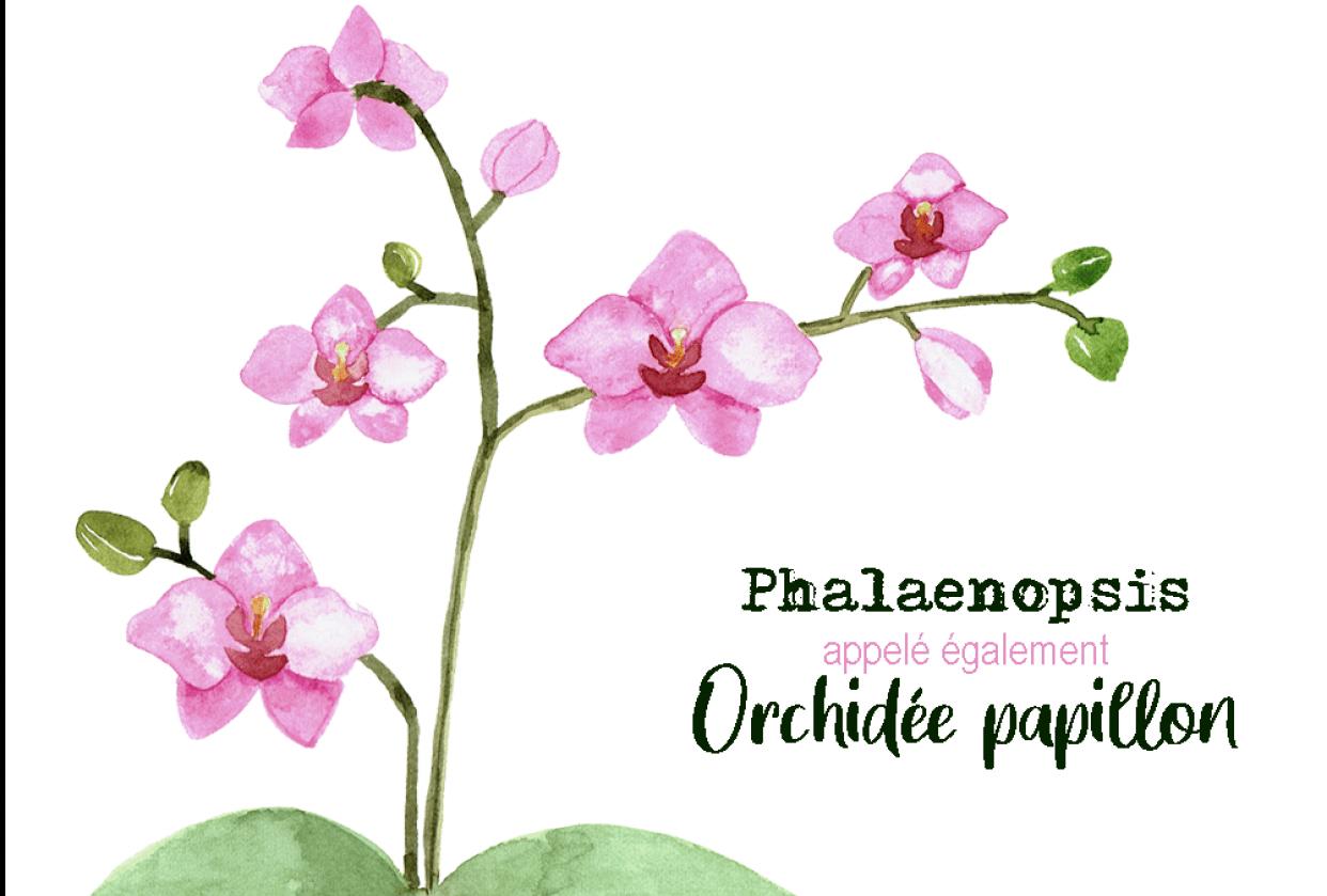 Orchidées - student project