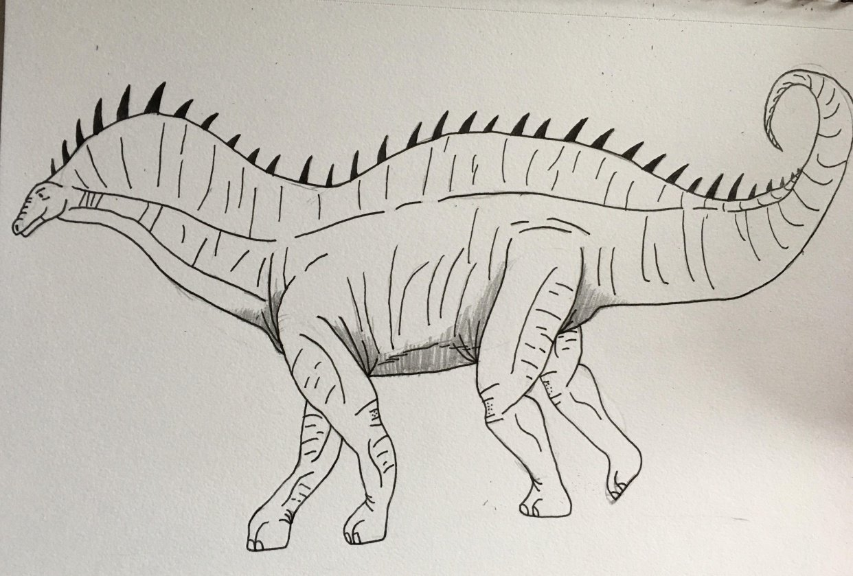 Amargasaurus - student project