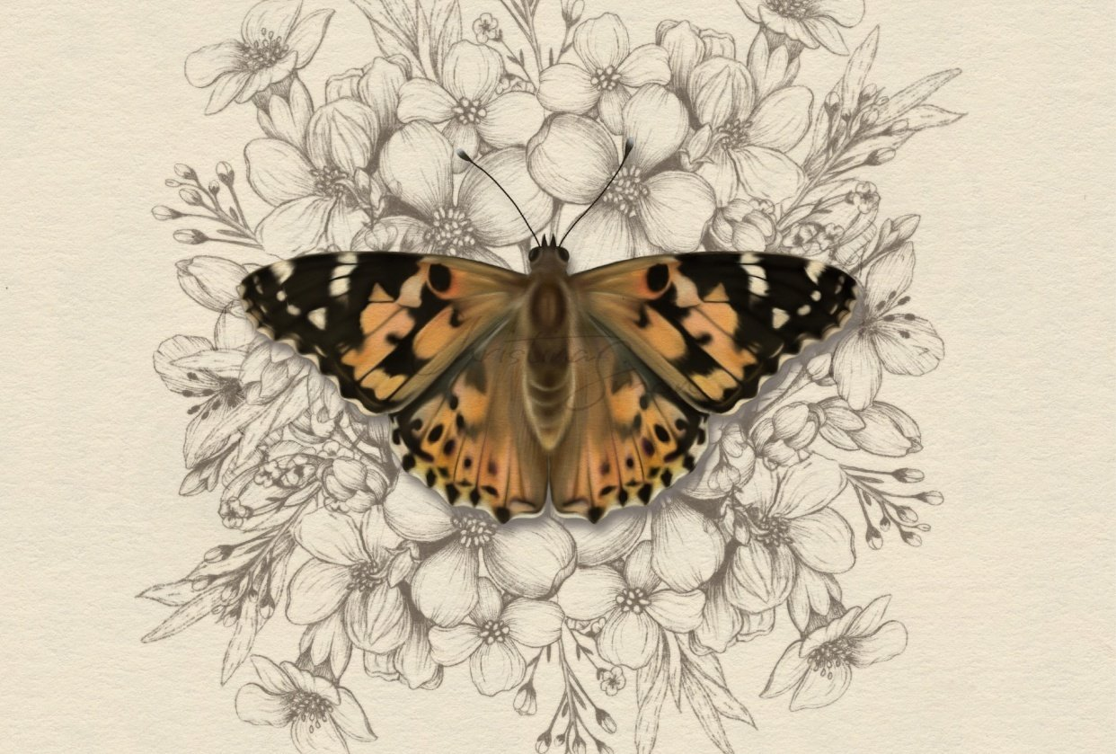 Painted Lady Butterfly and Co - student project