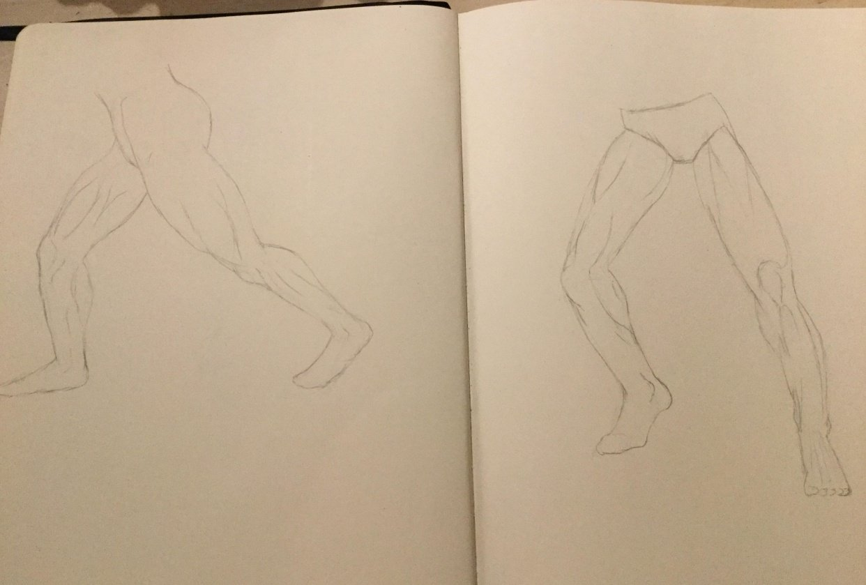 Anatomy of the leg - student project