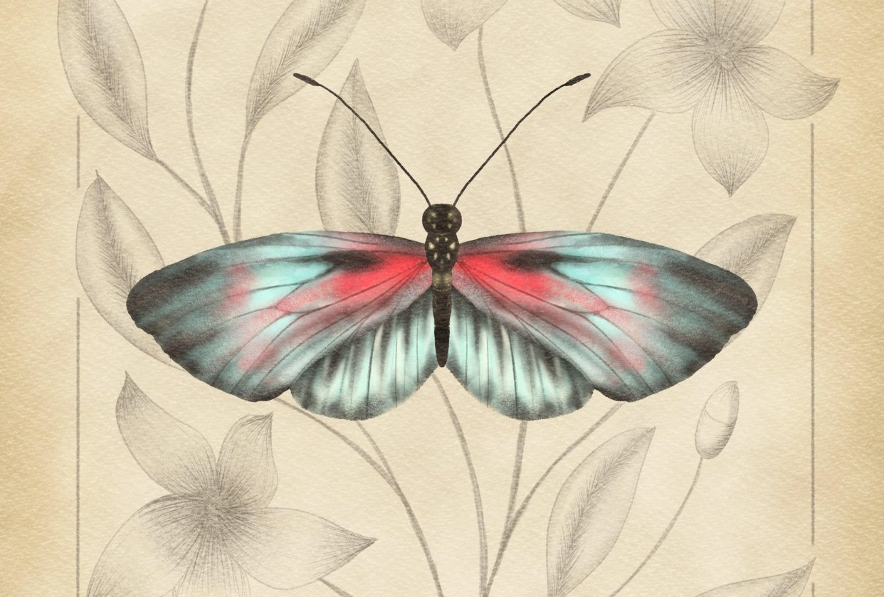 Vintage Style Butterfly Illustration - student project
