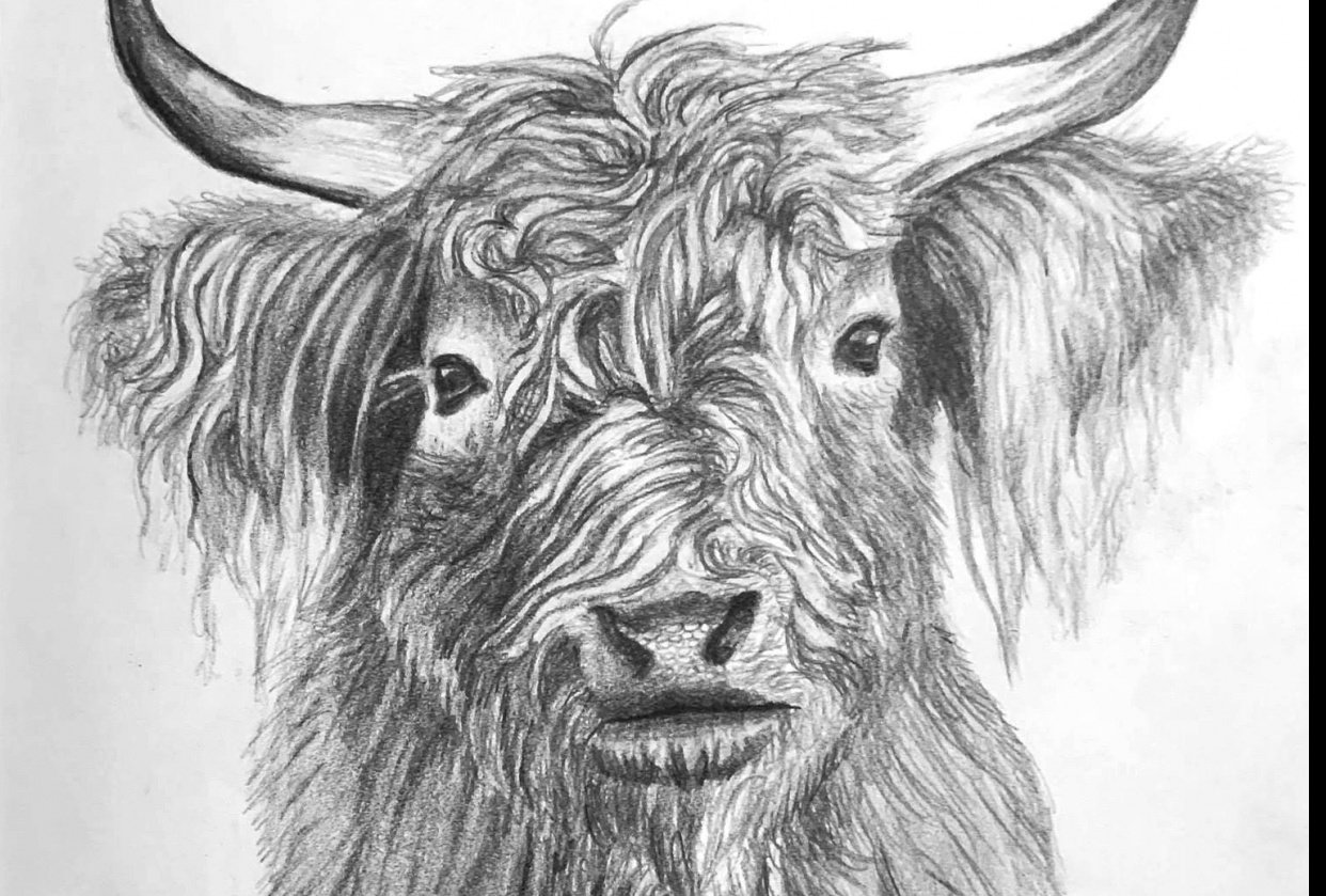 Highland Cow - student project