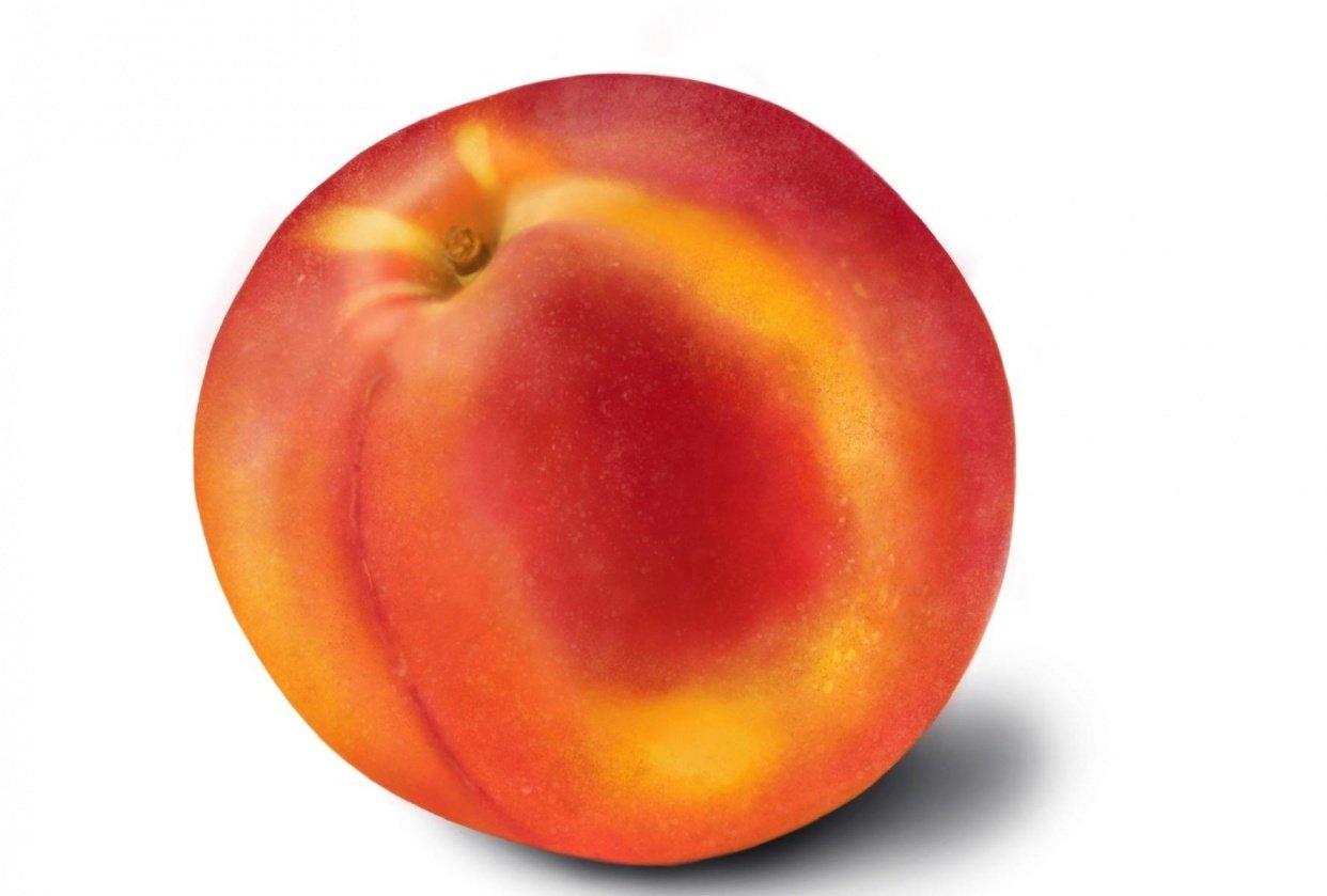 Fruit studies - student project
