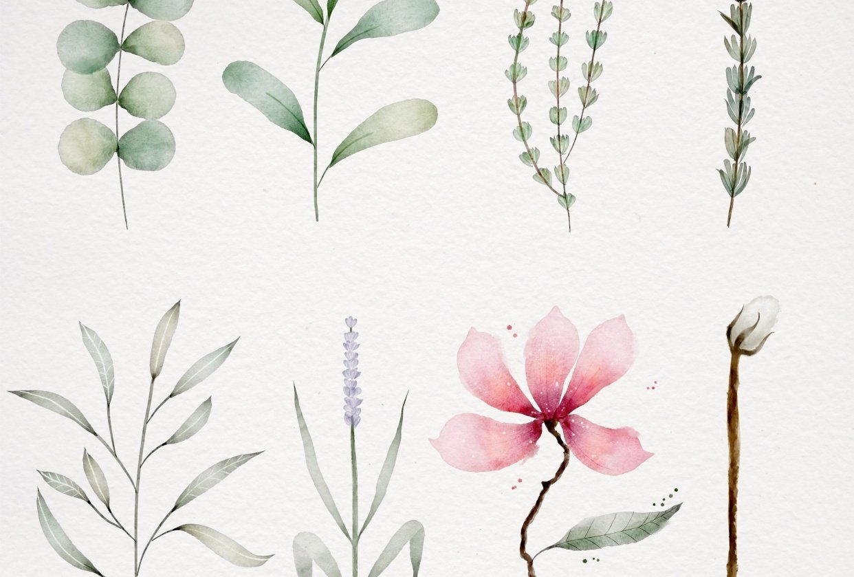 My Botanics for this class - student project