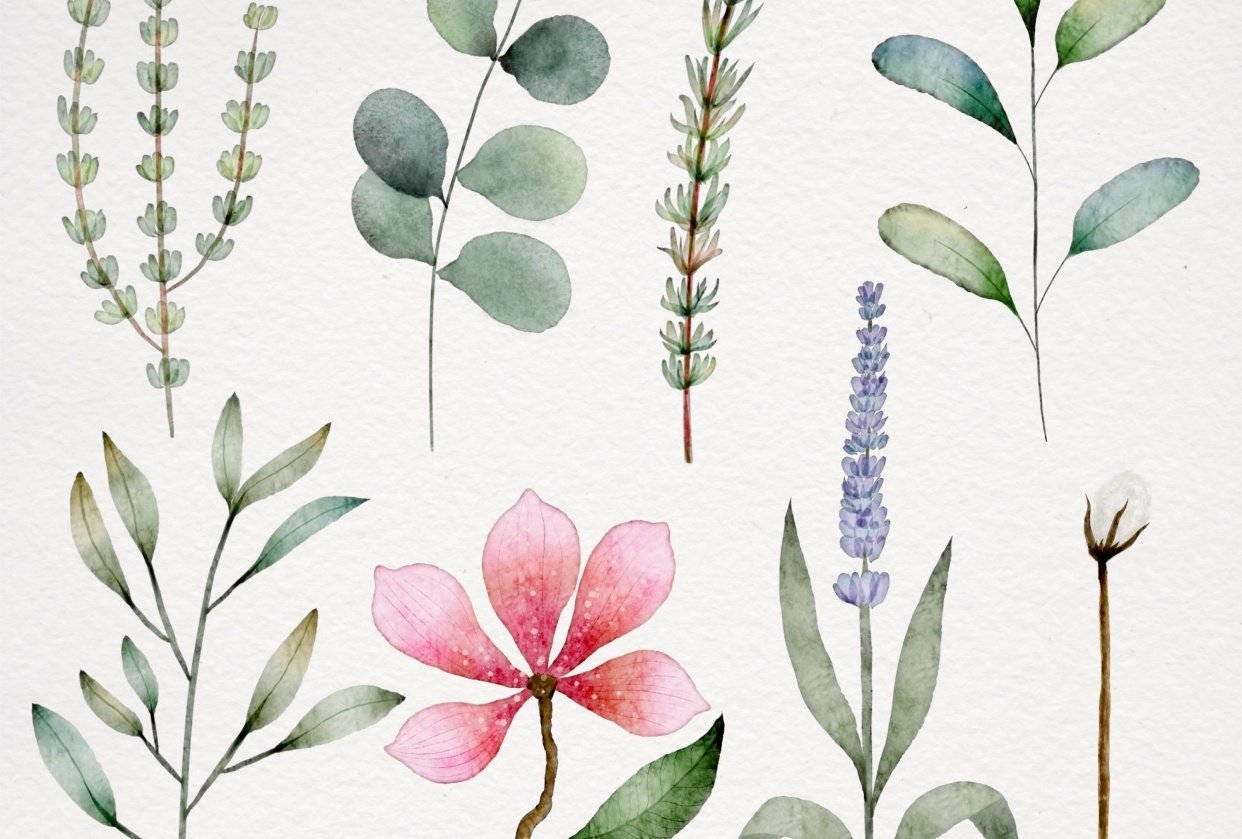 Botanical watercolor - student project