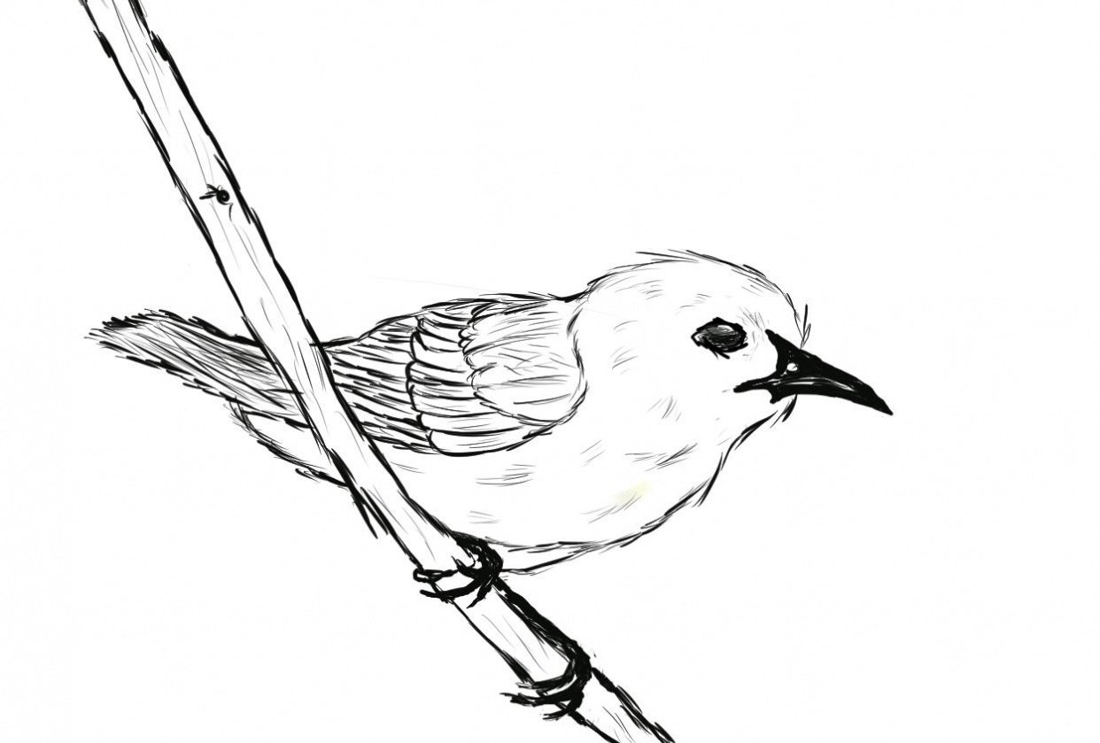 Prothonotary Warbler practice - student project