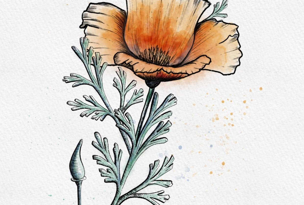 Gill's Poppy - student project