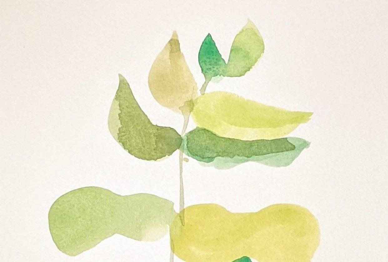 Eucalyptus watercolour - student project