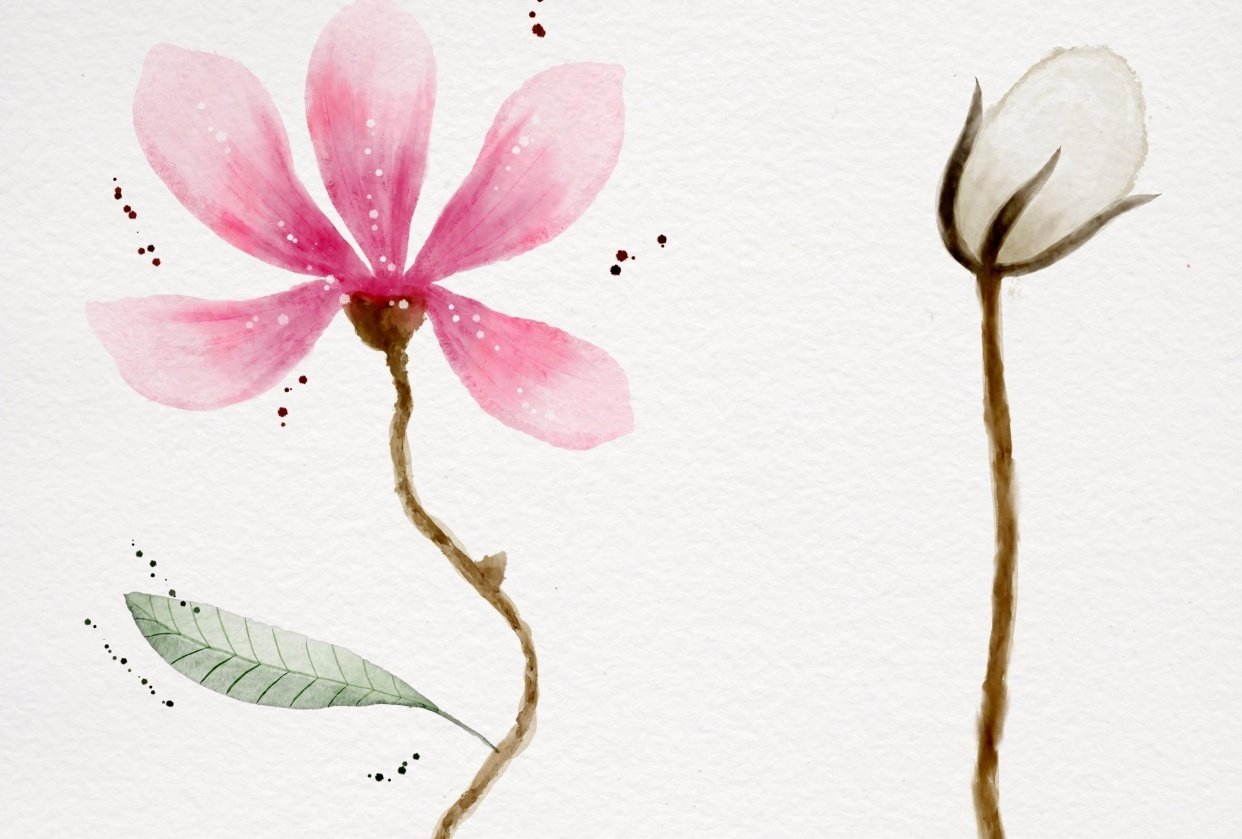 Botanical Watercolors - student project