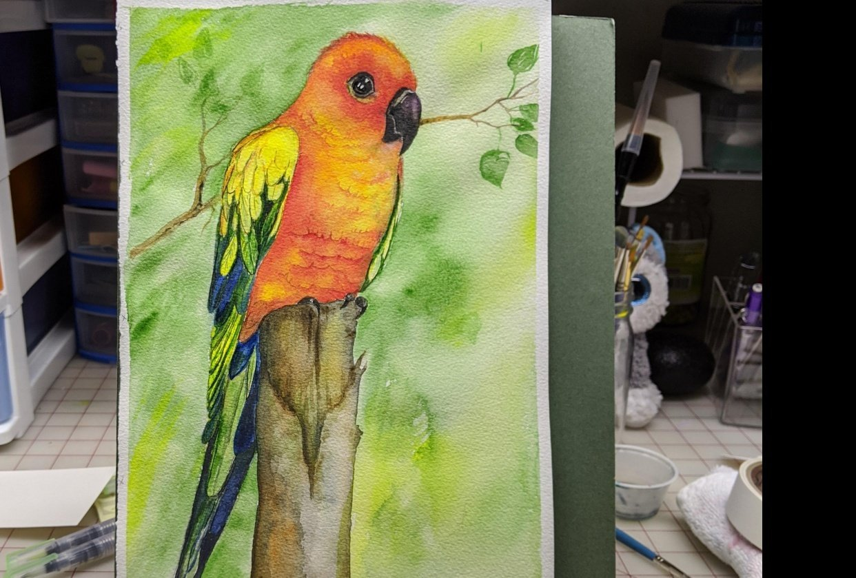 Jeanie's Conure - student project