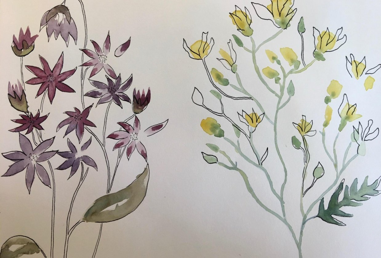 Watercolour and Ink Florals - student project