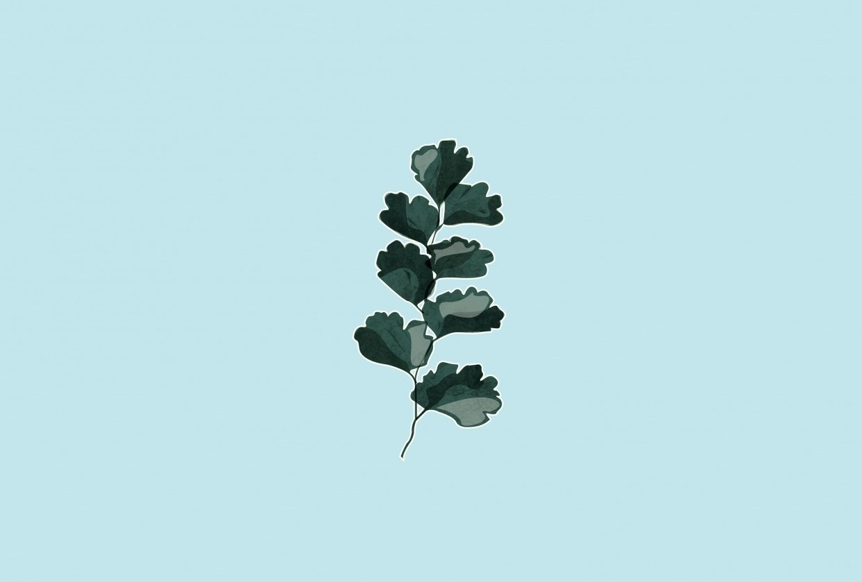 Fern Leaf - student project