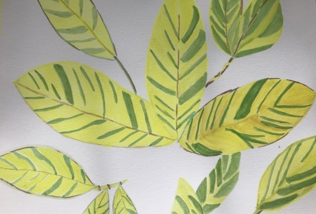 Argentine Leaves - student project