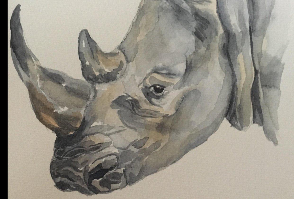 Rhinocerous - student project