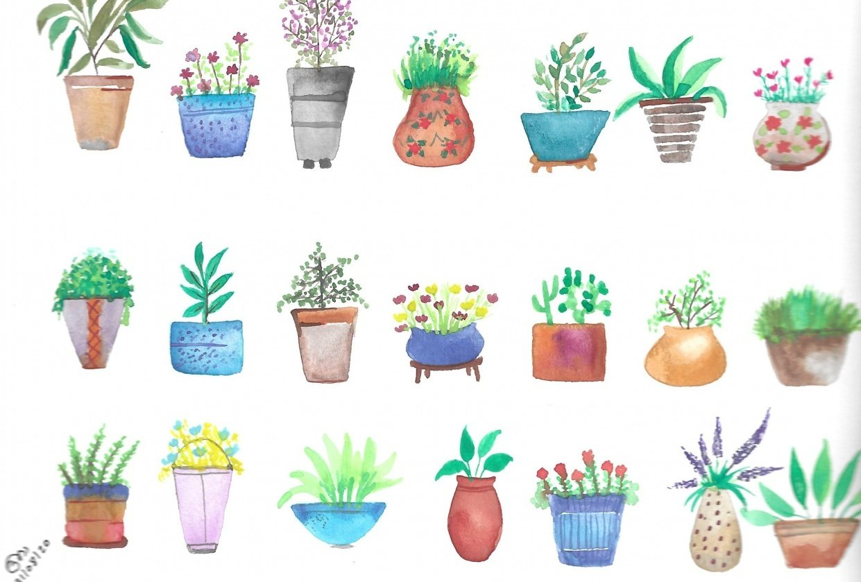 pots and plants - student project