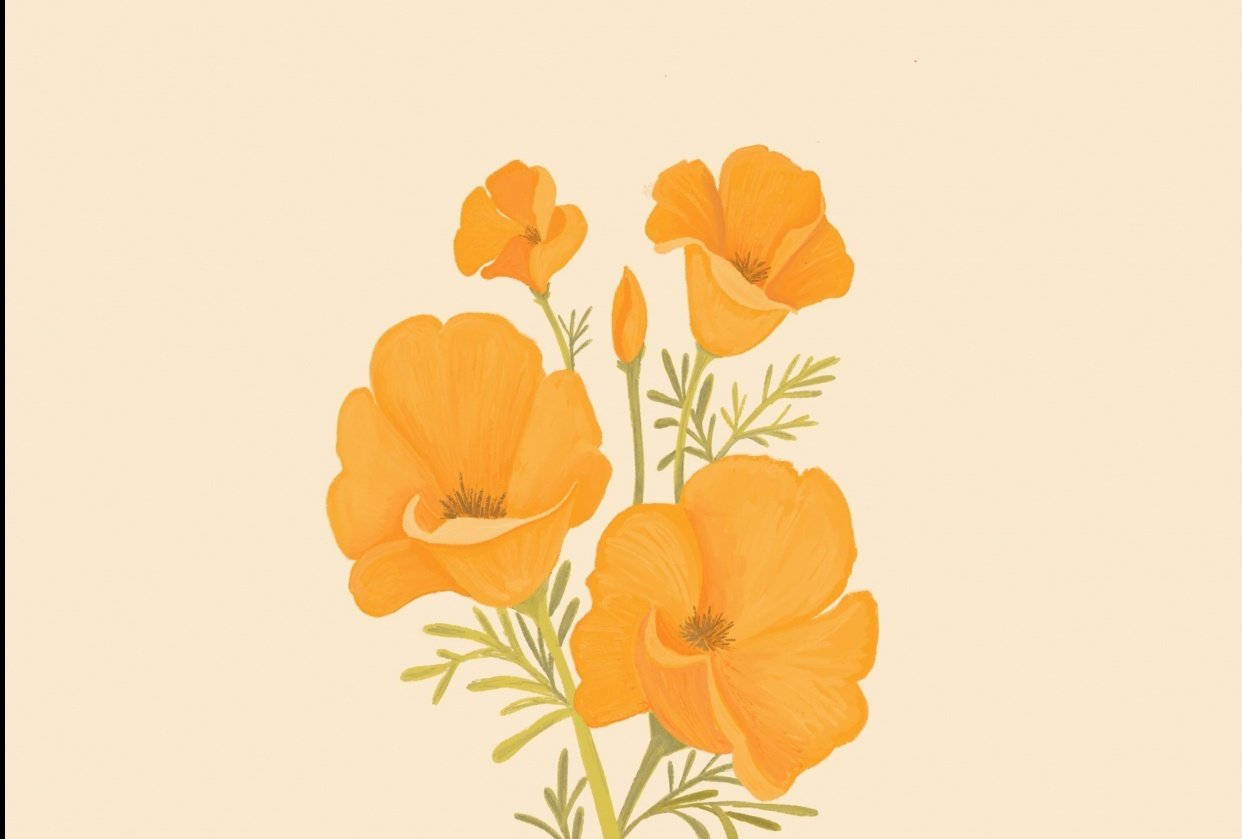 California Poppies - student project