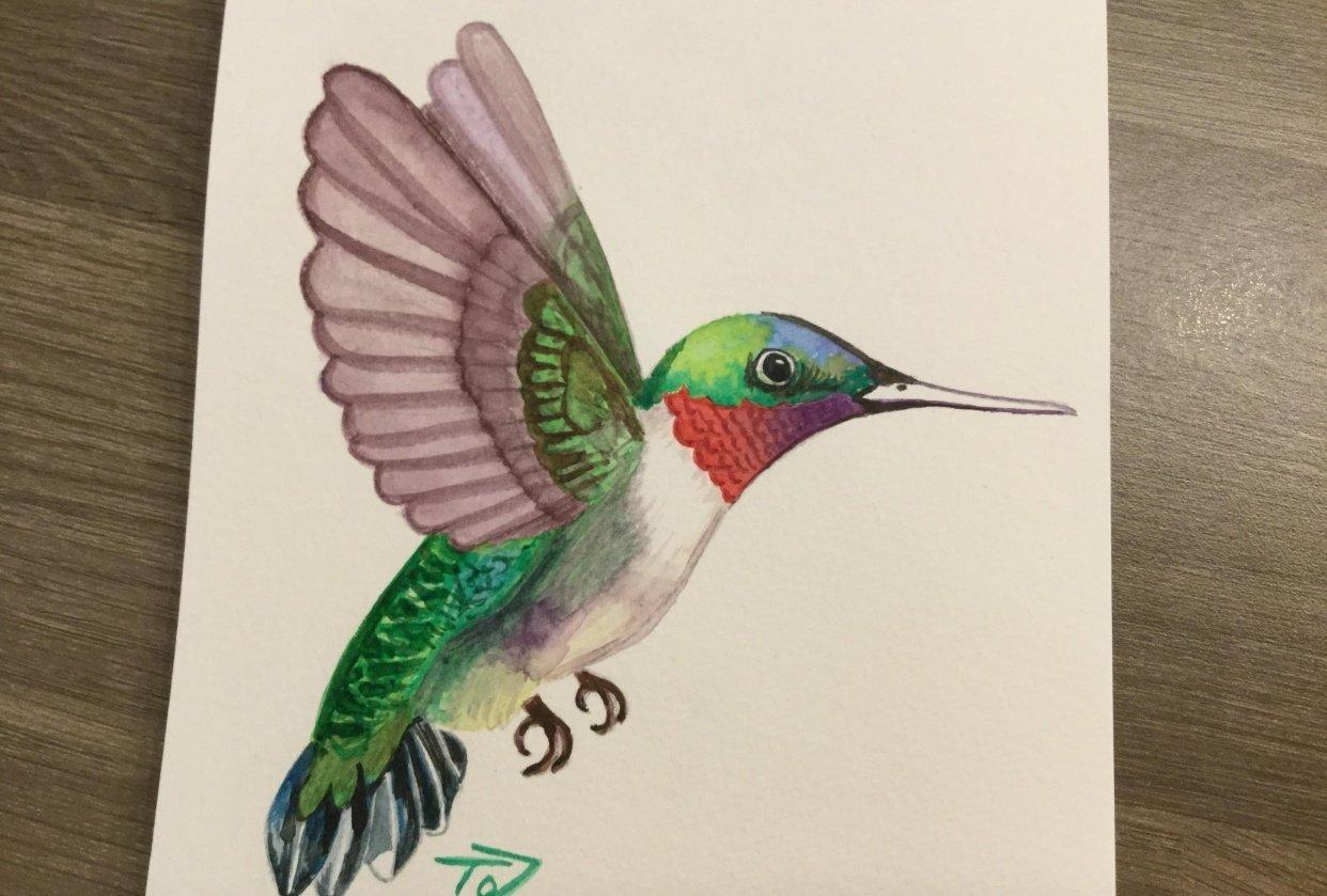 Humming Bird - student project