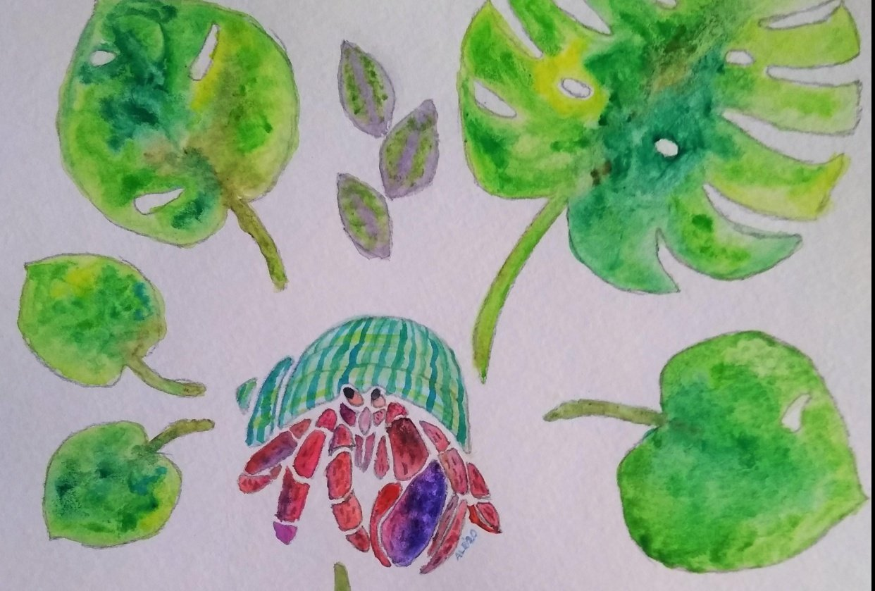 Hermit Crab Leaves - student project