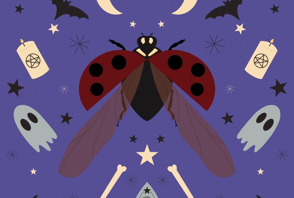 Spooky ladybird - student project