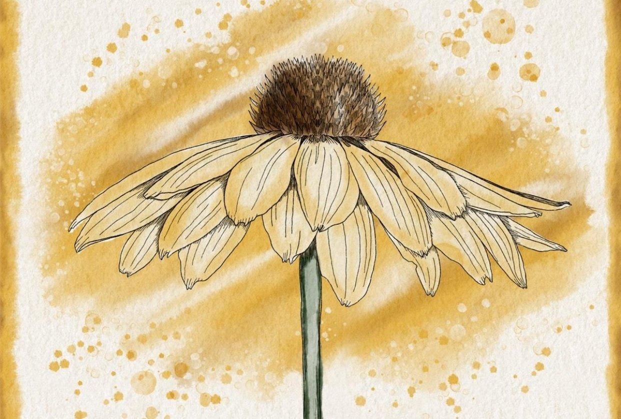 Rachel's Watercolor Botanicals - student project