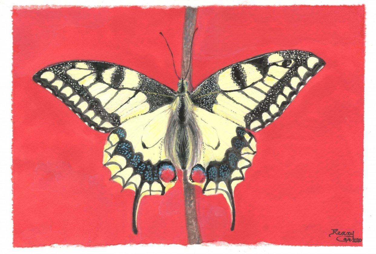 Butterfly paintings in gouache - student project