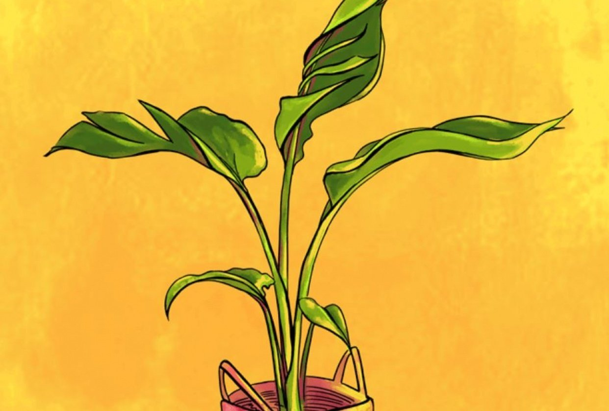 animating my plants - student project
