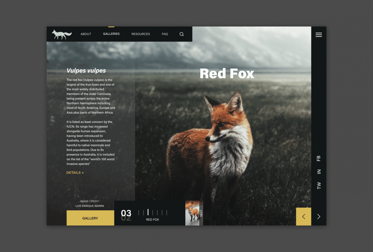 Red Fox - student project