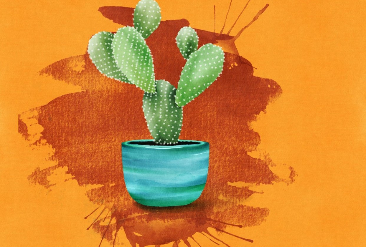 Cactus Love - student project