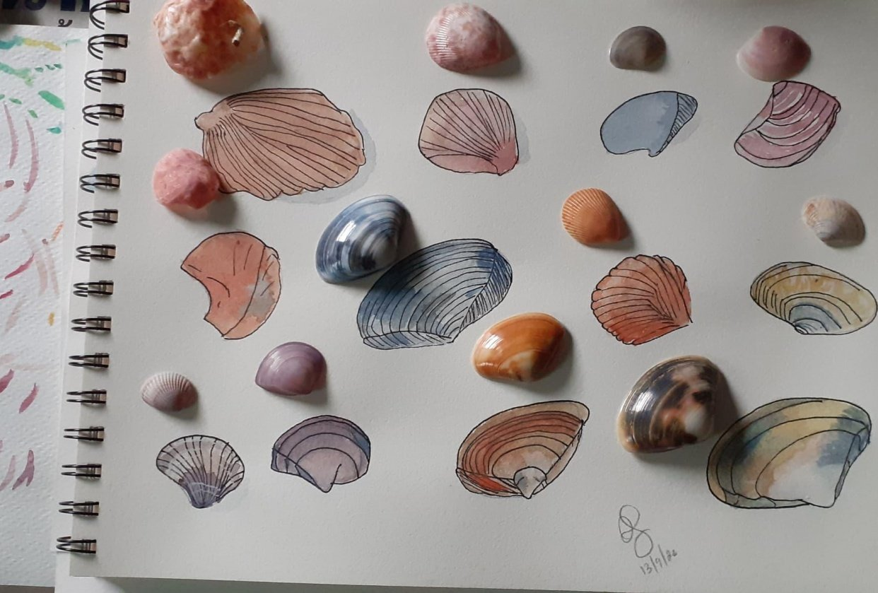 Shells with water colours - student project