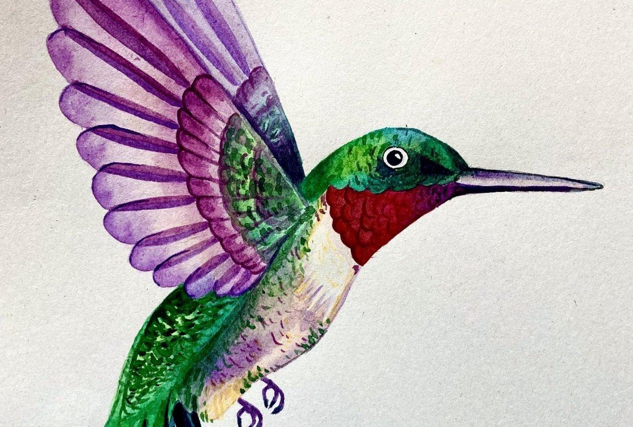 Hummingbird! - student project