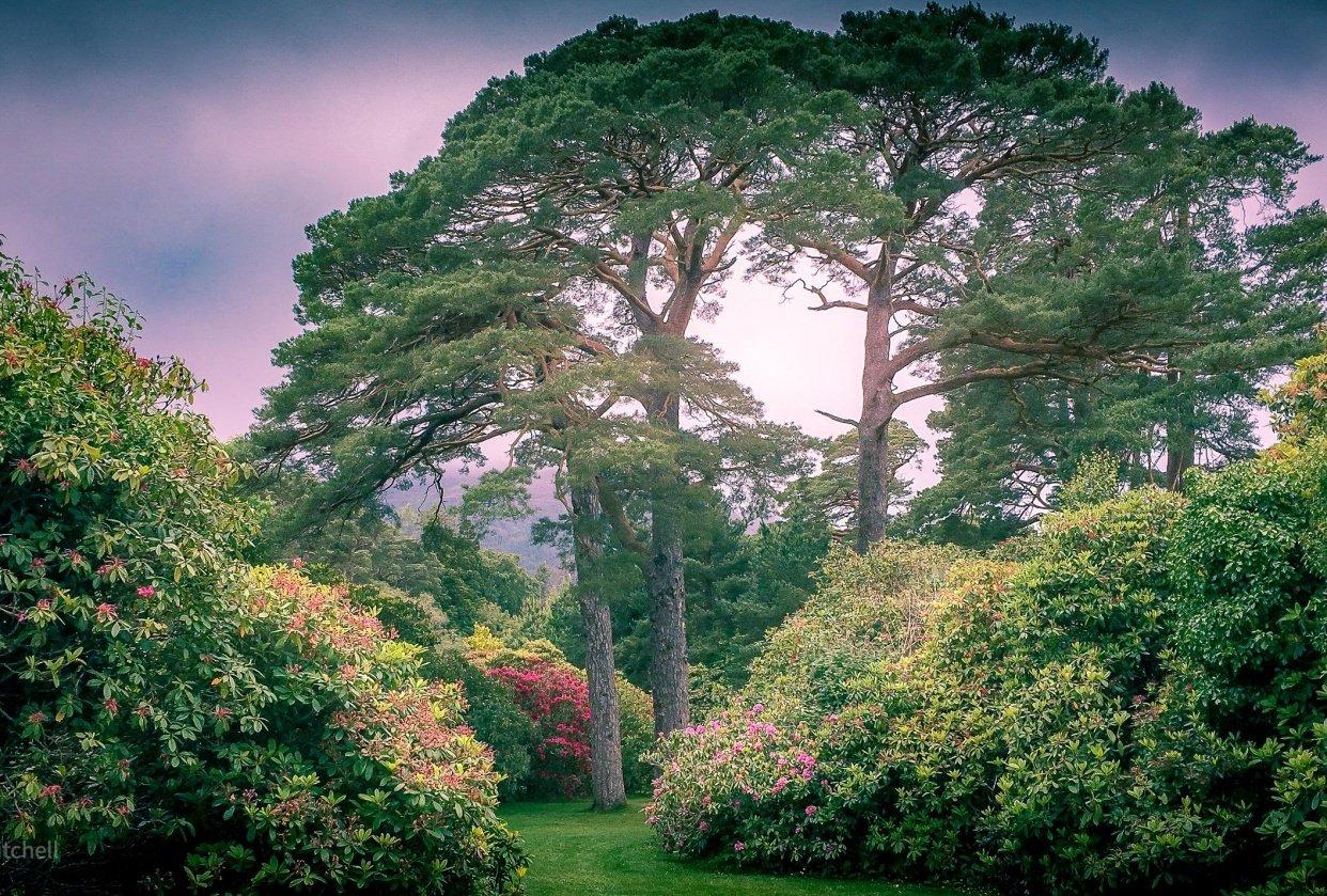 Muckross Gardens - student project